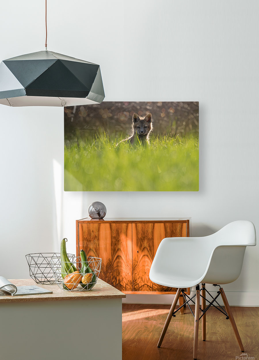 A contre jour    HD Metal print with Floating Frame on Back