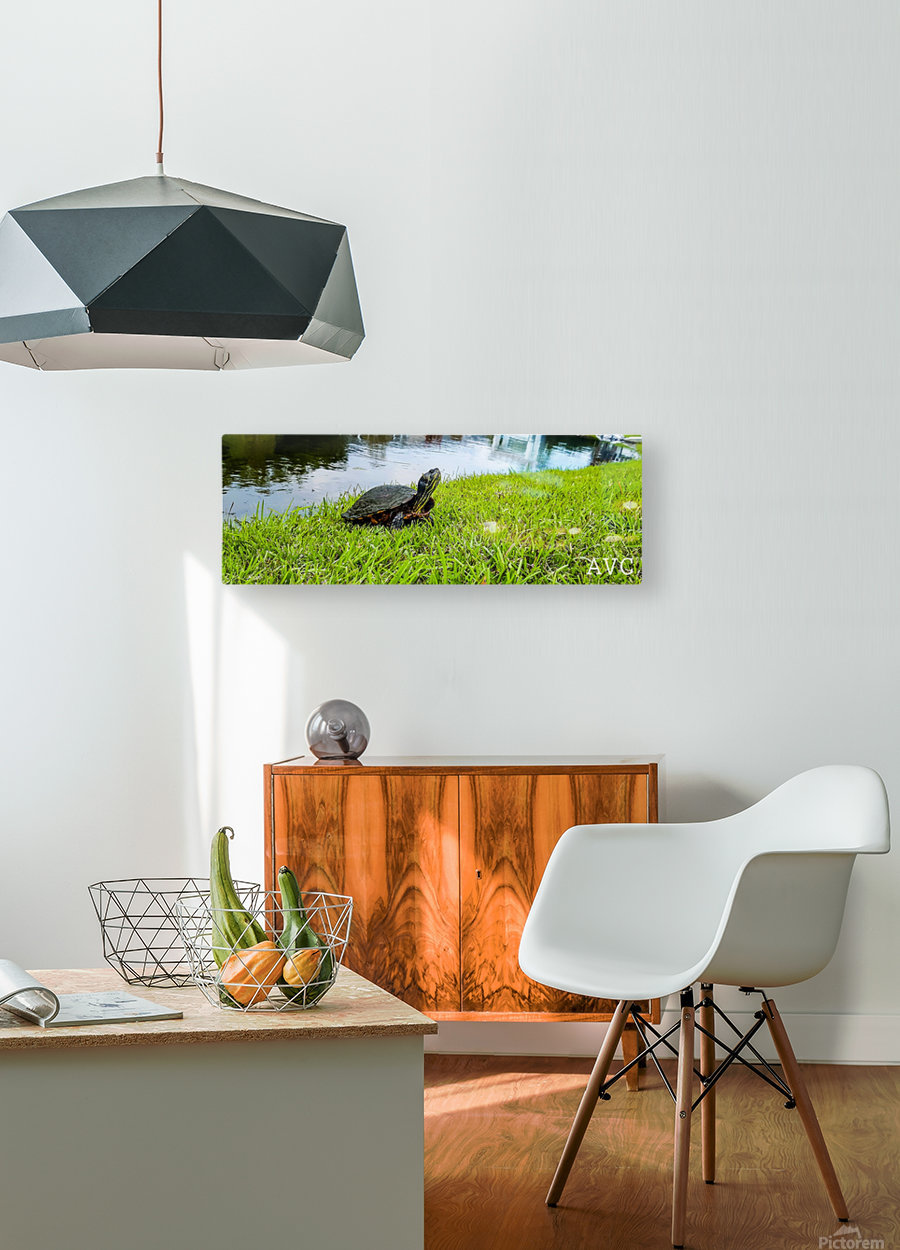 Turtle Portrait  HD Metal print with Floating Frame on Back