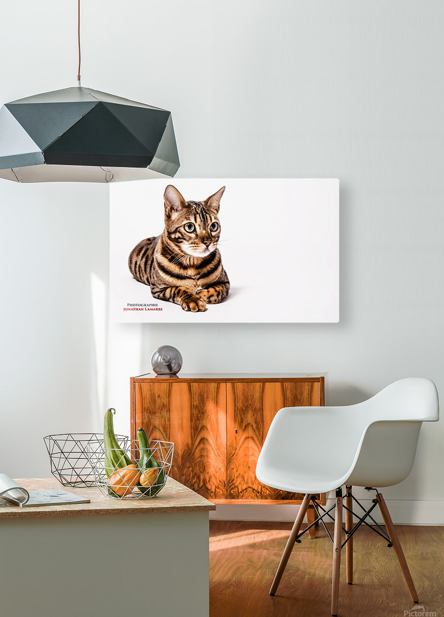 Cat life  HD Metal print with Floating Frame on Back