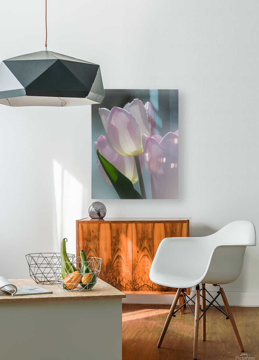 Pale Pink Tulips  HD Metal print with Floating Frame on Back
