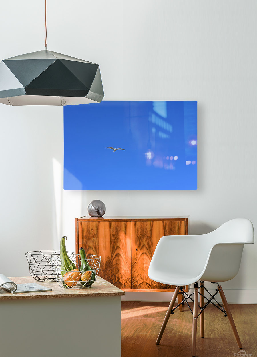 Hovering Seagull  HD Metal print with Floating Frame on Back