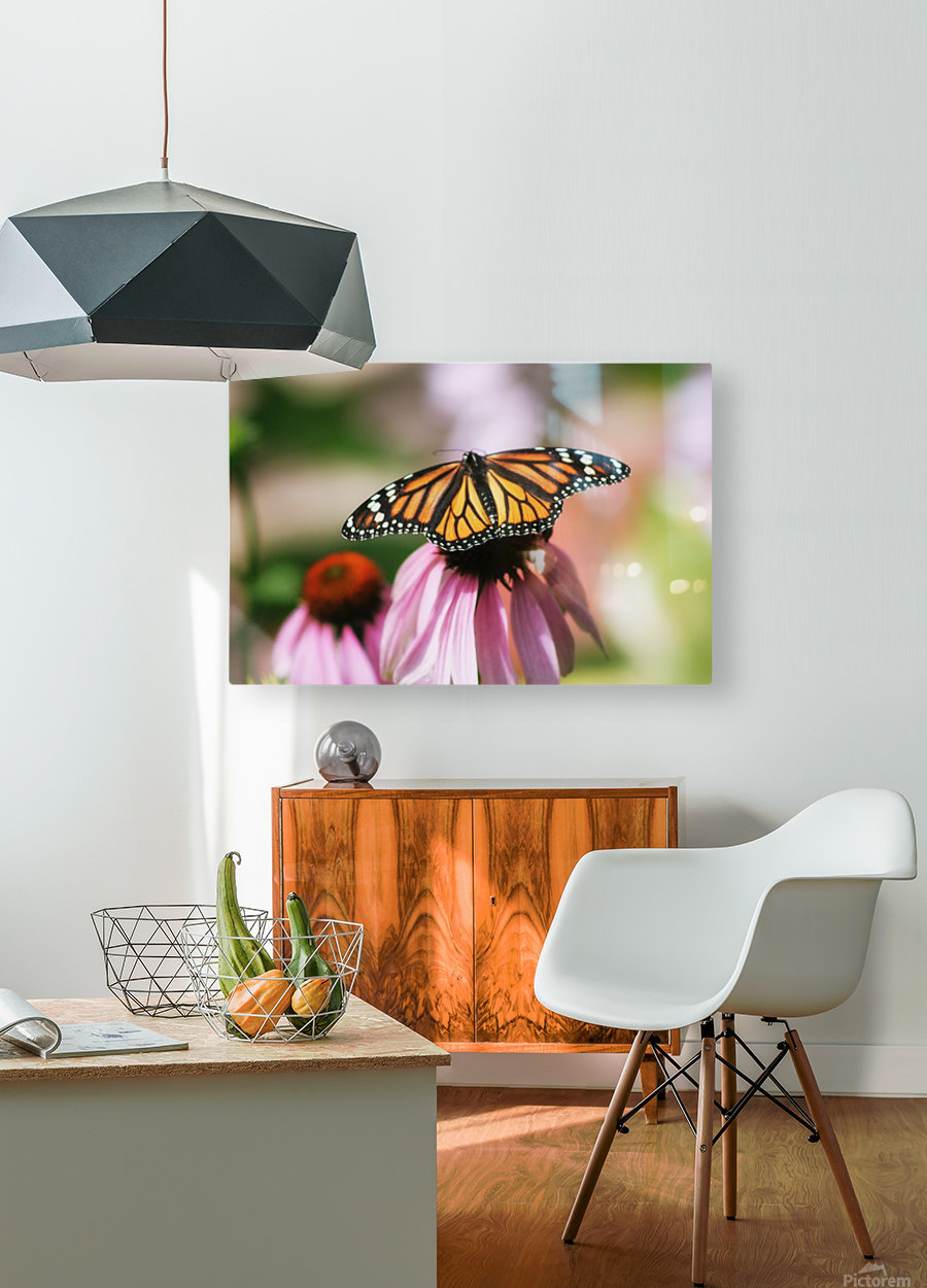 Closeup Butterfly on Cone Flower  HD Metal print with Floating Frame on Back