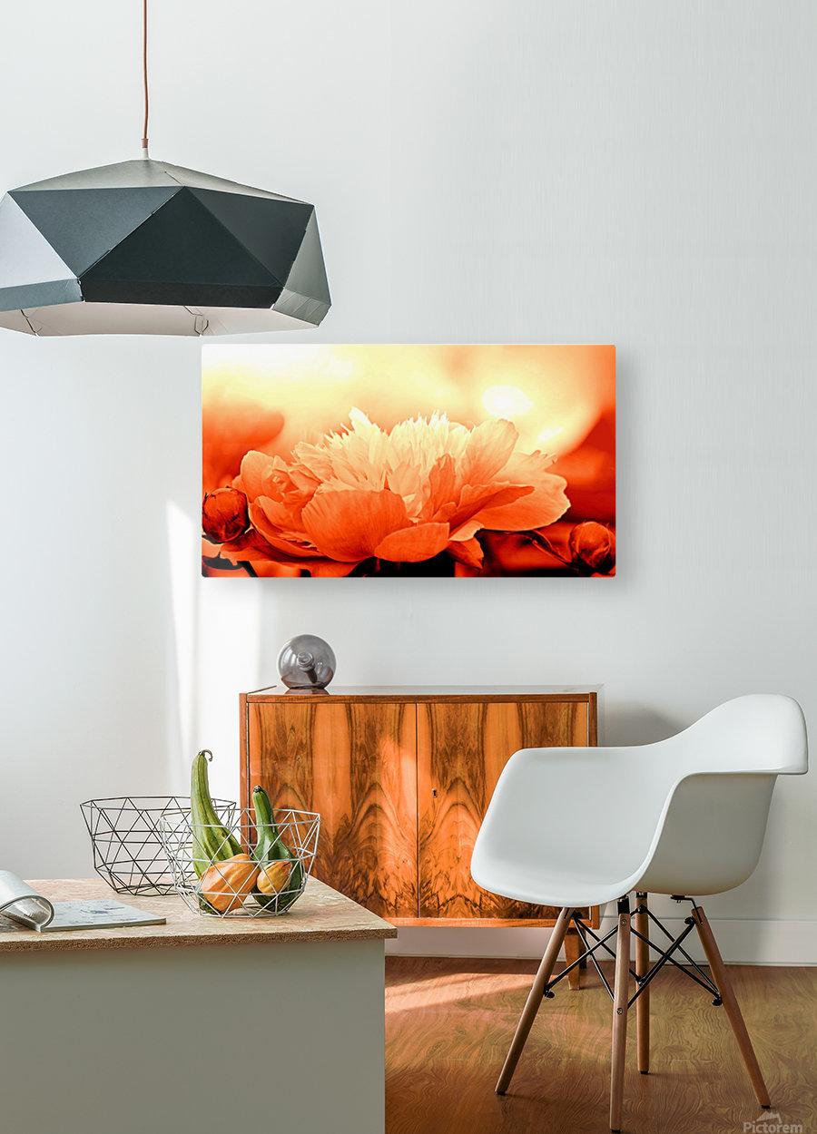 Heavenly Peony Orange  HD Metal print with Floating Frame on Back