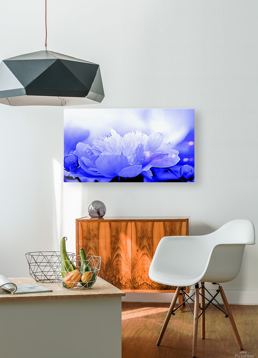 Heavenly Peony Blue  HD Metal print with Floating Frame on Back