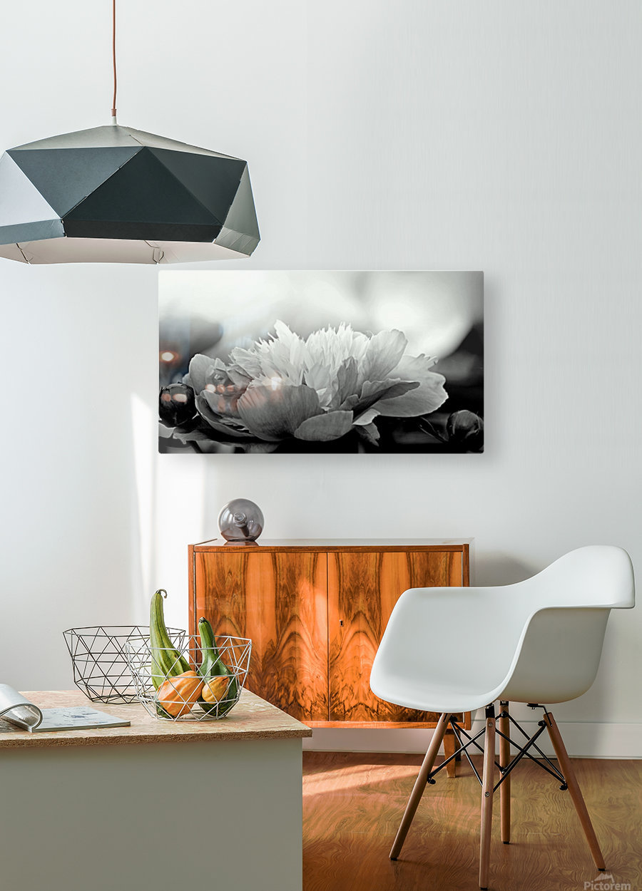 Heavenly Peony Black and White  HD Metal print with Floating Frame on Back