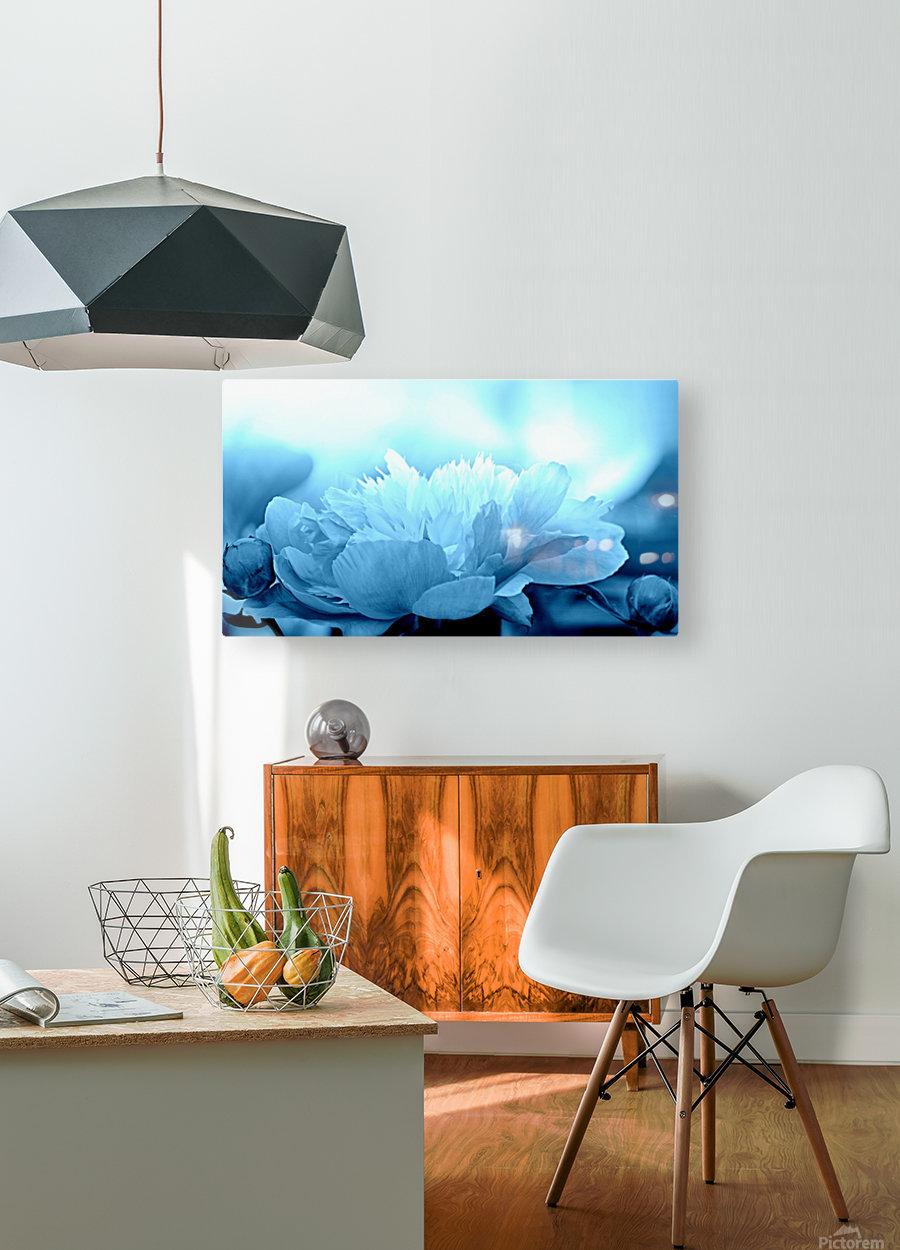 Heavenly Peony Aqua Blue  HD Metal print with Floating Frame on Back