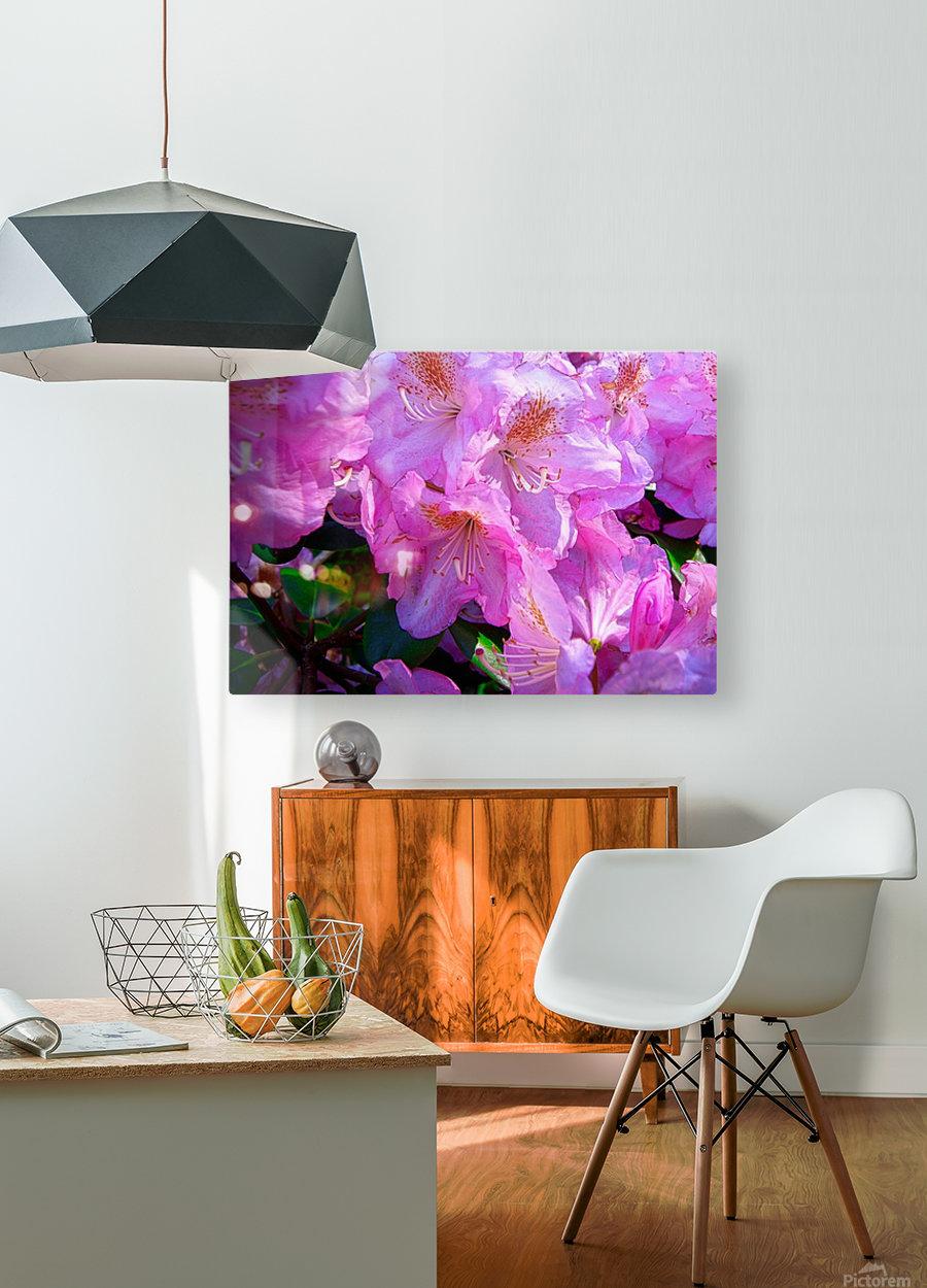 PINK FLOWER  HD Metal print with Floating Frame on Back