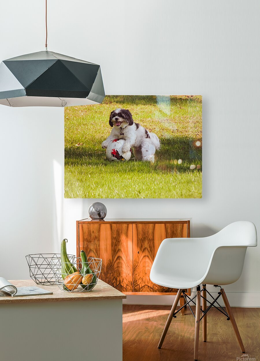 Ball Humpin  HD Metal print with Floating Frame on Back