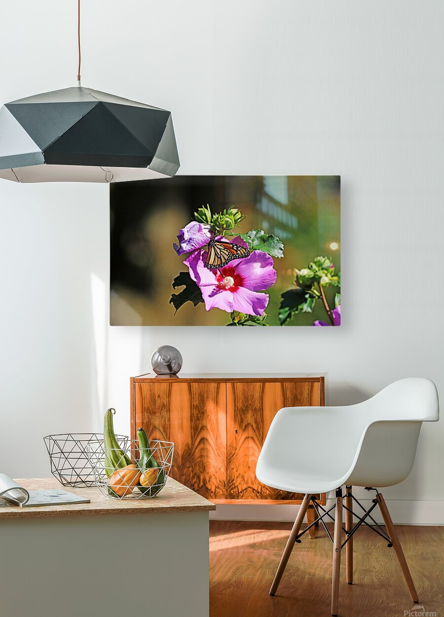 Monarch And Rose Of Sharon  HD Metal print with Floating Frame on Back
