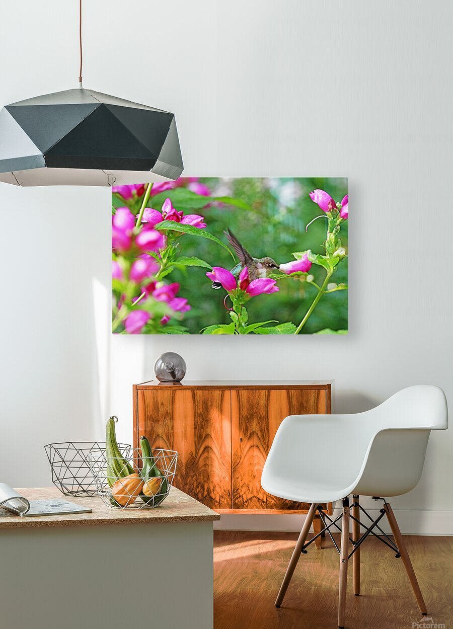 The Lure Of The Pink Turtlehead  HD Metal print with Floating Frame on Back