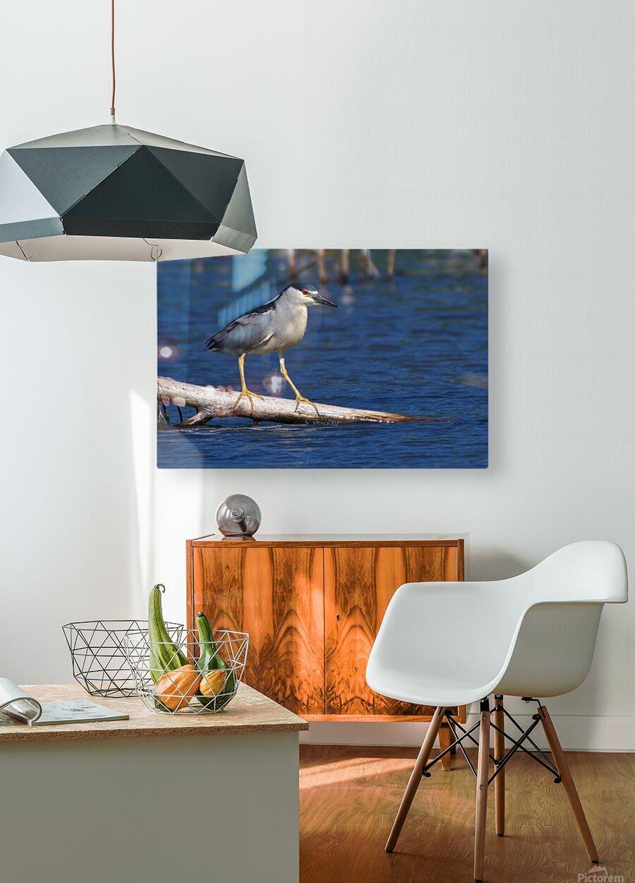 Balancing act  HD Metal print with Floating Frame on Back