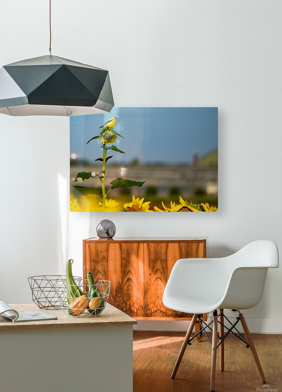 Sunflower Perch  HD Metal print with Floating Frame on Back