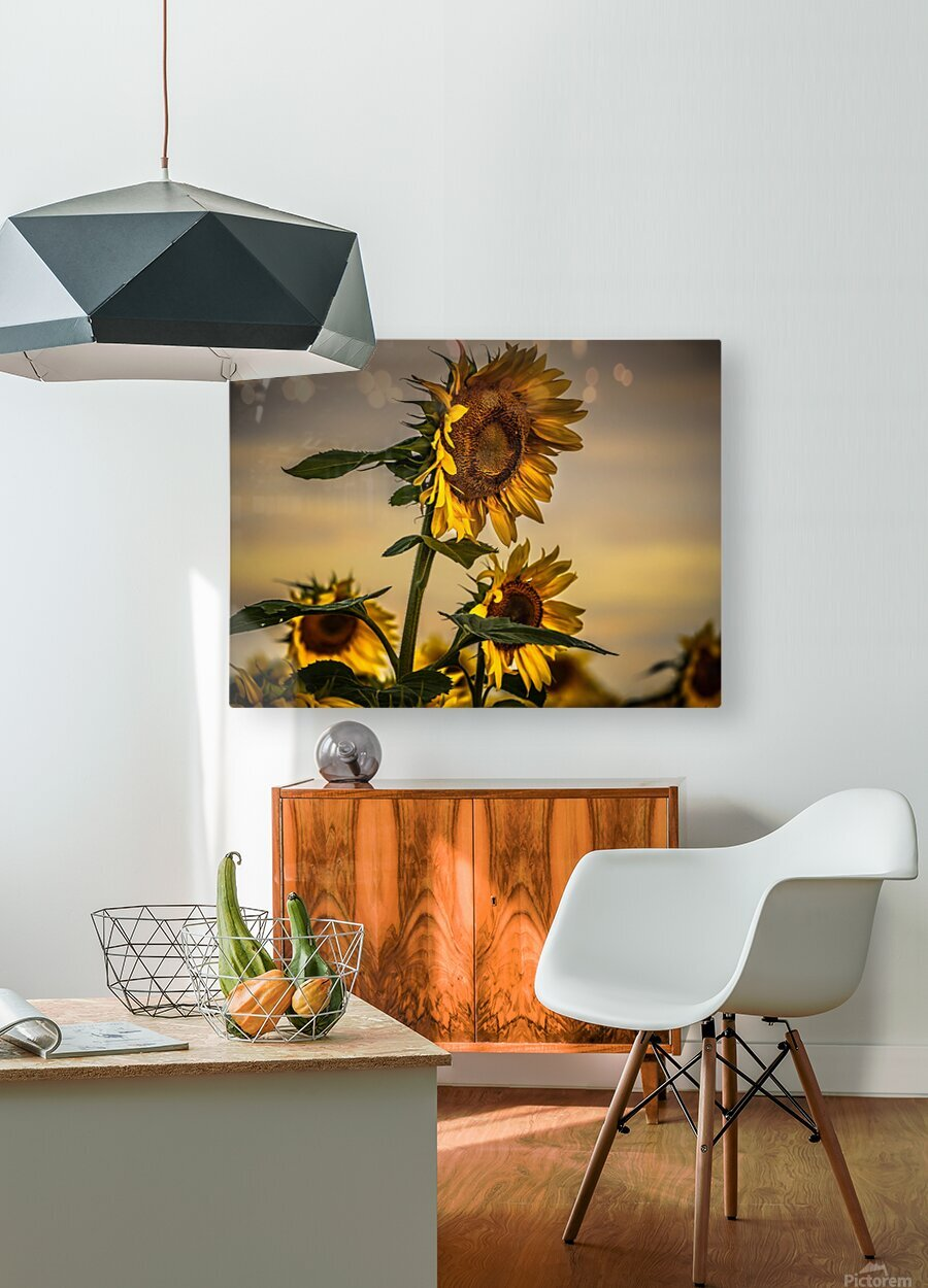 Gone with the Sunflowers  HD Metal print with Floating Frame on Back