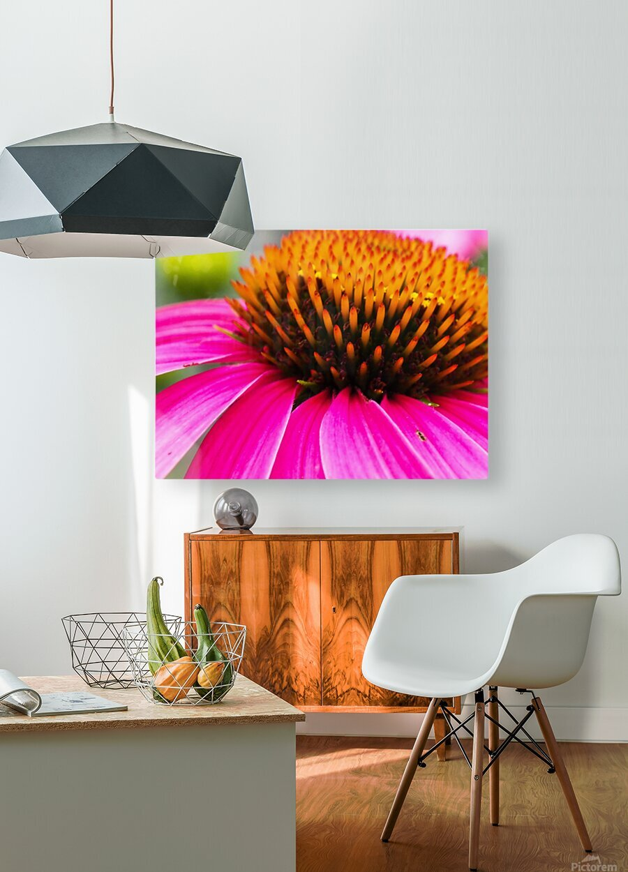 Cone Flower  HD Metal print with Floating Frame on Back