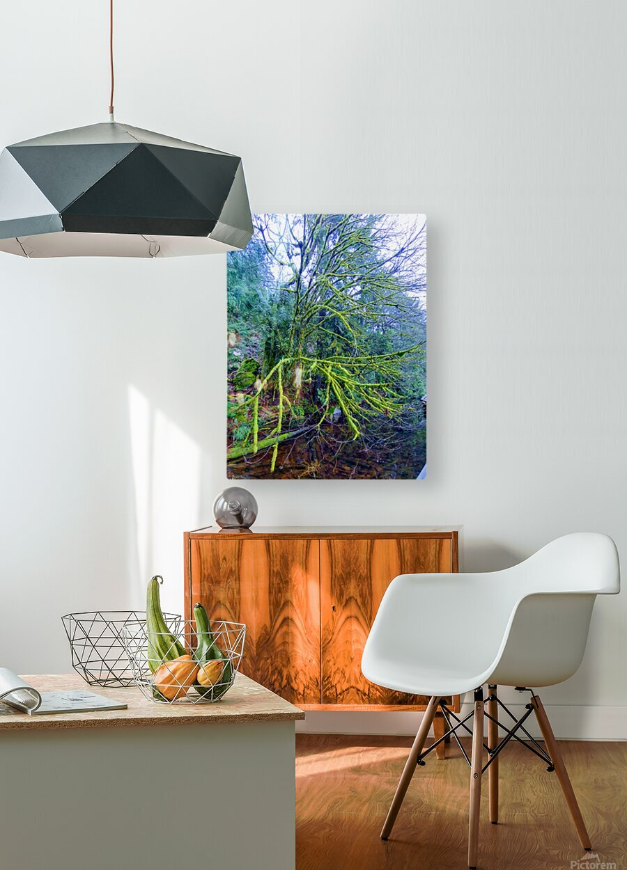 MOSSY BRANCHES  HD Metal print with Floating Frame on Back