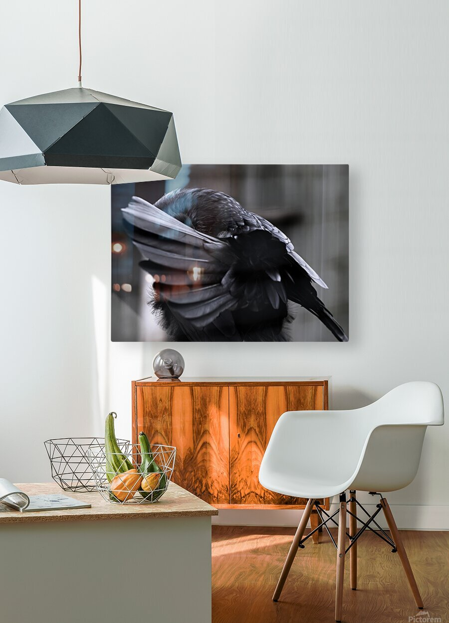 La corneille  HD Metal print with Floating Frame on Back