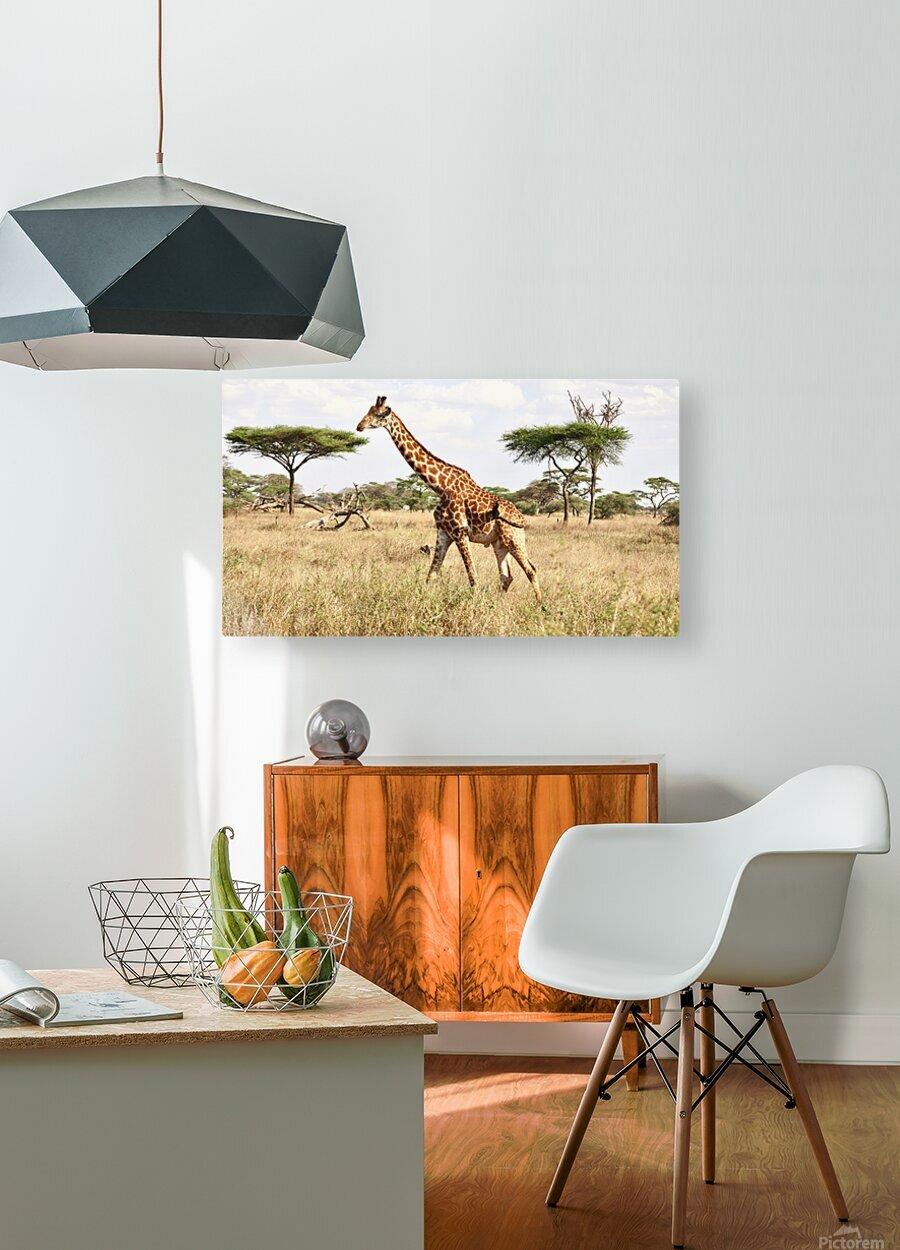 Giraffe  HD Metal print with Floating Frame on Back