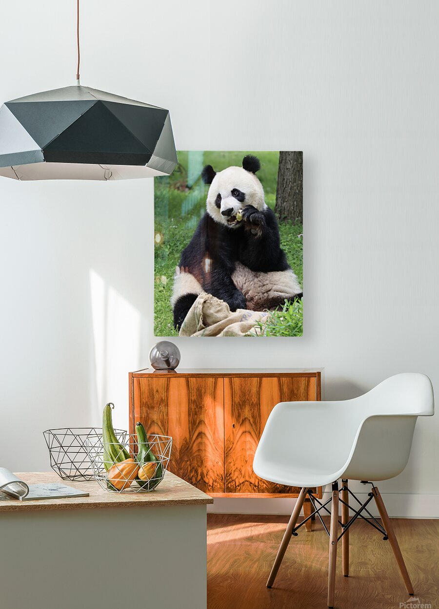 Panda  HD Metal print with Floating Frame on Back