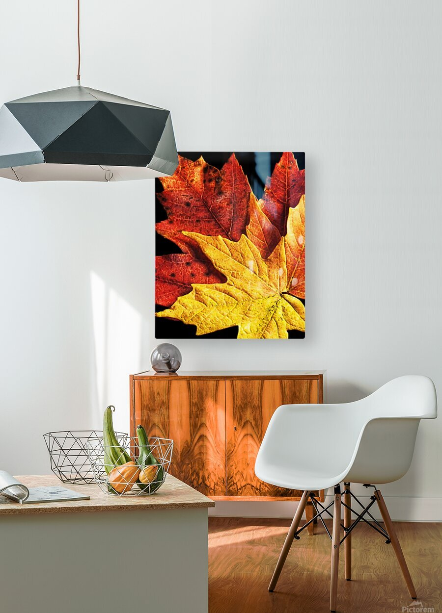 Fall Maple Leaves 2  HD Metal print with Floating Frame on Back