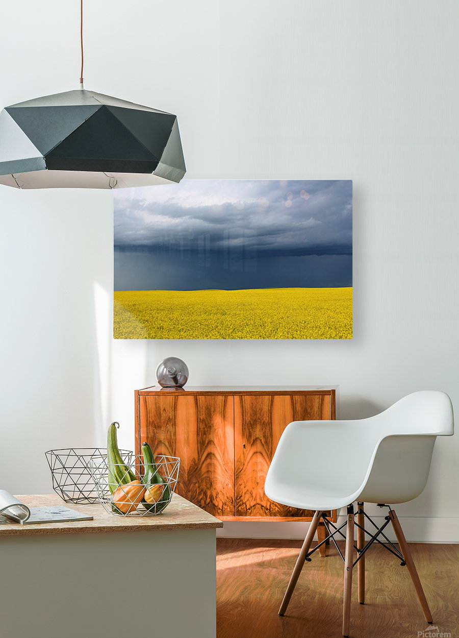 Summer Canola  HD Metal print with Floating Frame on Back