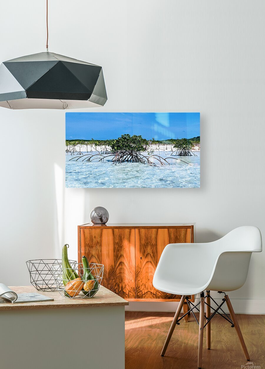 Mangroves in Estuary  HD Metal print with Floating Frame on Back
