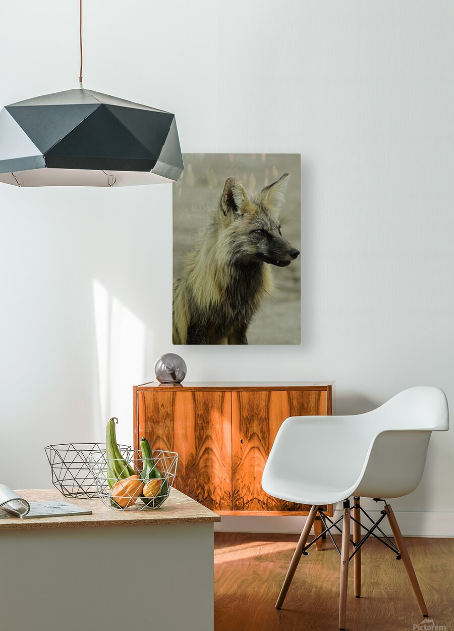 Fox  HD Metal print with Floating Frame on Back