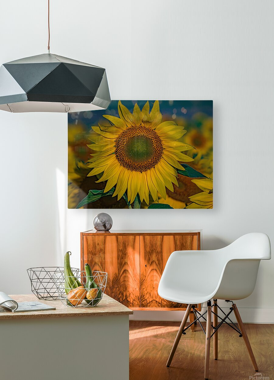 When Sunny Gets Blue  HD Metal print with Floating Frame on Back