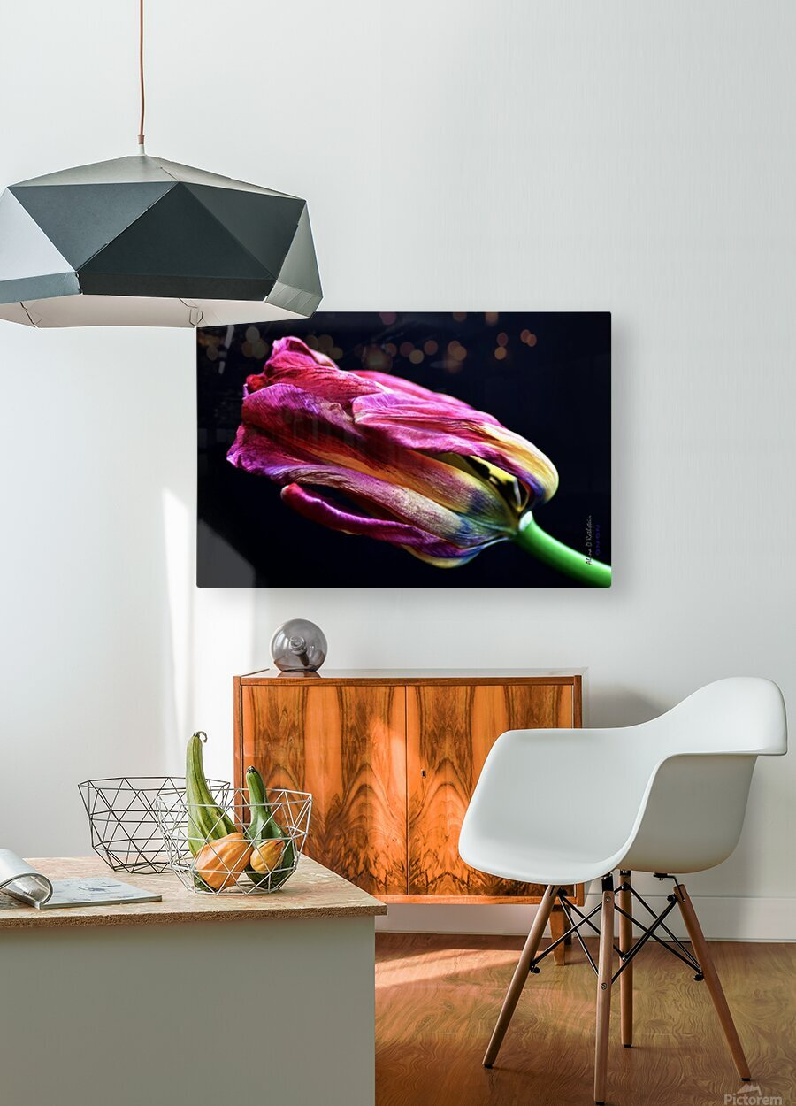 Tulip 4  HD Metal print with Floating Frame on Back
