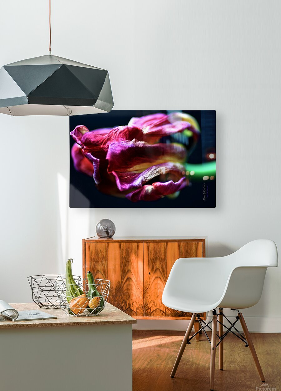 Tulip 5  HD Metal print with Floating Frame on Back