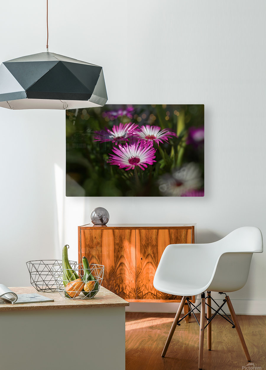 sun worshippers  rosadream  HD Metal print with Floating Frame on Back