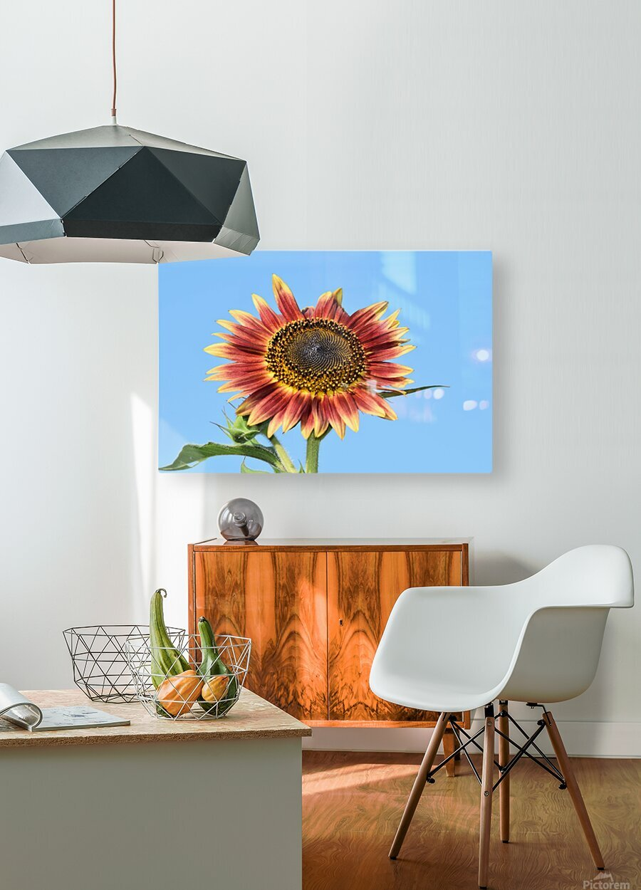 outstretched  HD Metal print with Floating Frame on Back