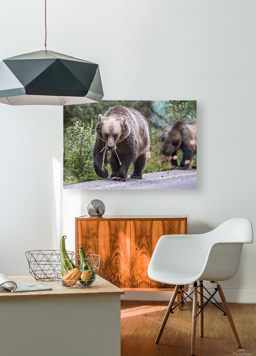 Grizzly Bear - Mouth Full  HD Metal print with Floating Frame on Back
