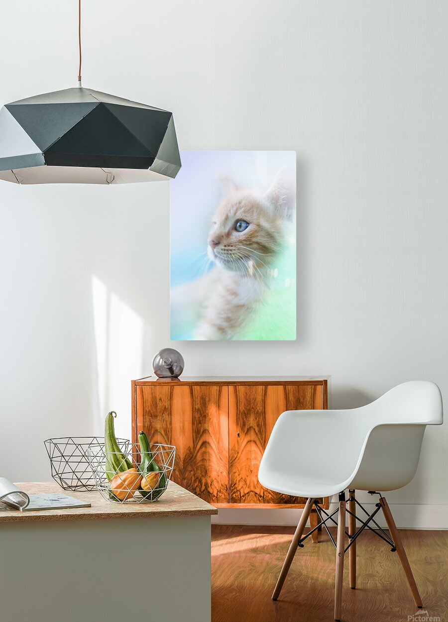 catshadow  HD Metal print with Floating Frame on Back