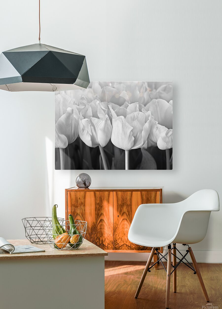 Bunch of Tulips close-up  HD Metal print with Floating Frame on Back