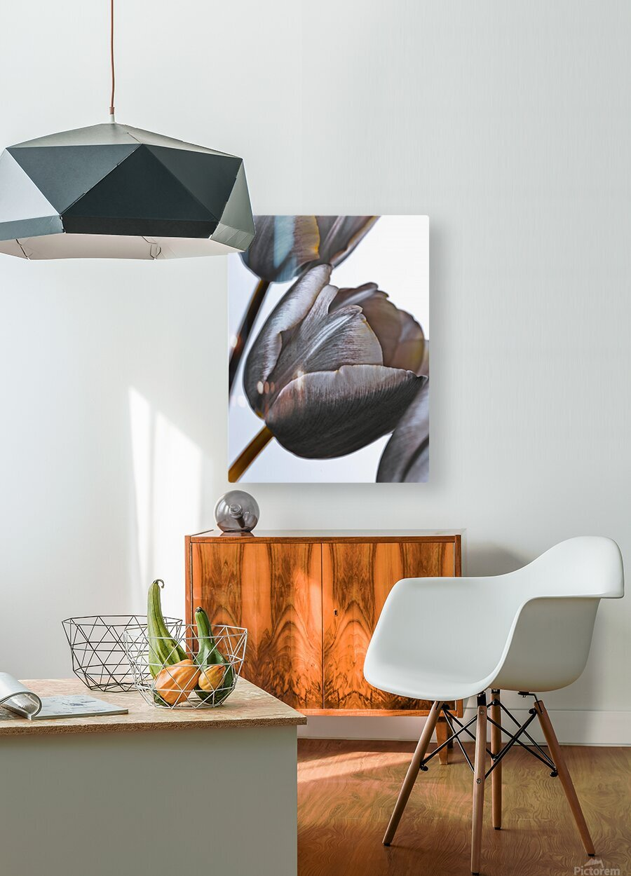 Tulip flowers on white background  HD Metal print with Floating Frame on Back