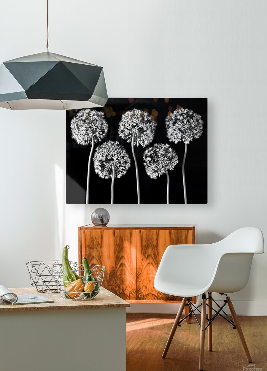 Allium flowers  HD Metal print with Floating Frame on Back