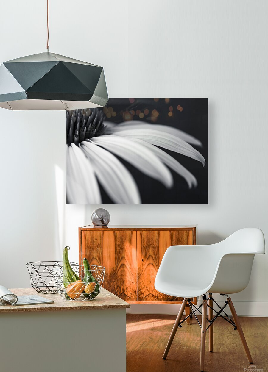 Coneflower close-up  HD Metal print with Floating Frame on Back