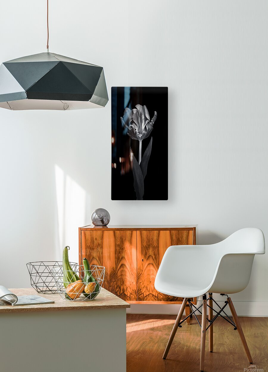 Rcoco tulip, side view  HD Metal print with Floating Frame on Back