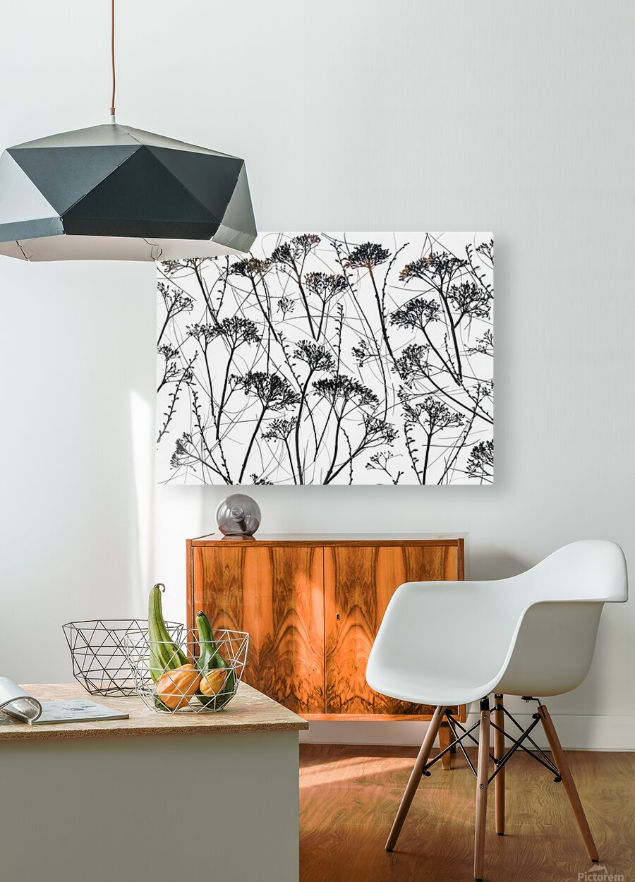 Silhouette of dried plants  HD Metal print with Floating Frame on Back
