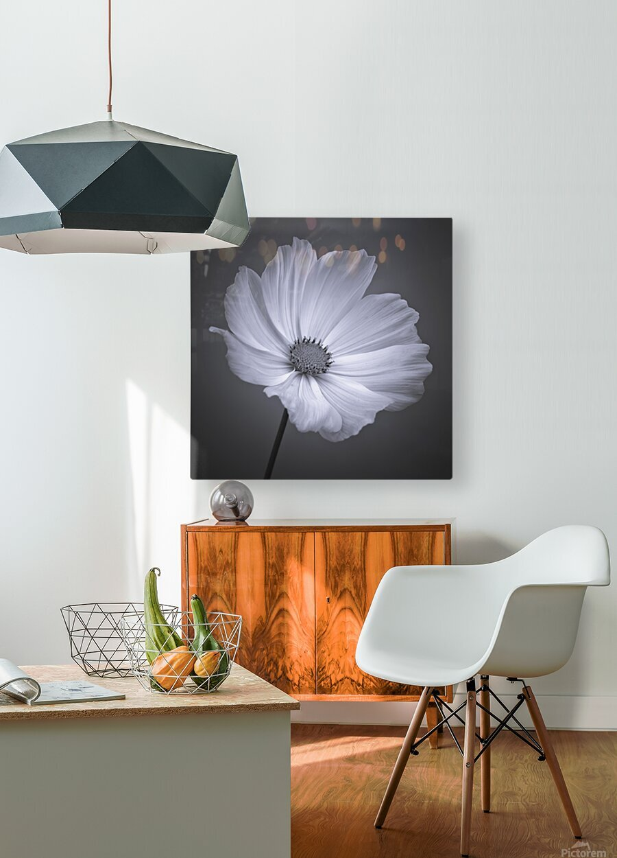Cosmos flower  HD Metal print with Floating Frame on Back