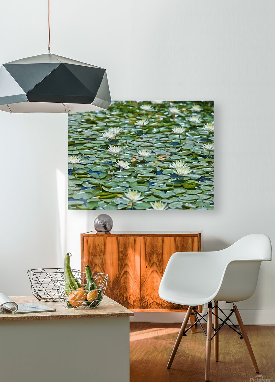 Water Lilies  HD Metal print with Floating Frame on Back