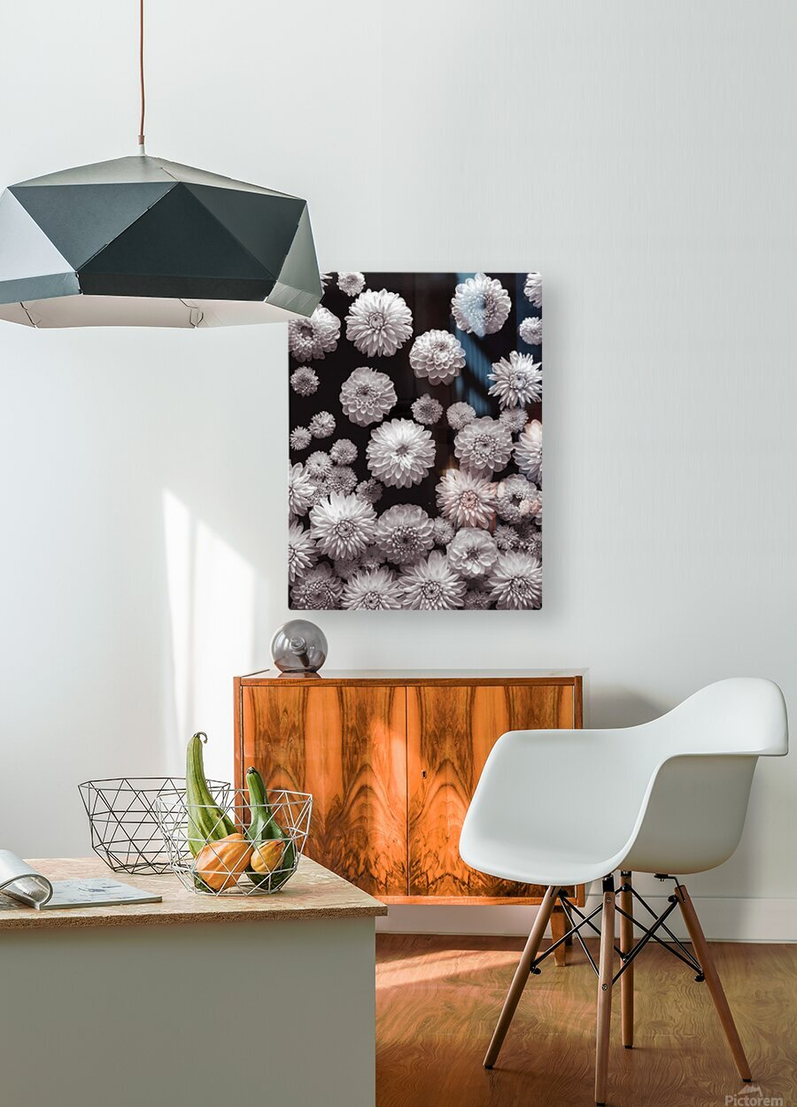 Dahlia Flowers, Full Frame  HD Metal print with Floating Frame on Back