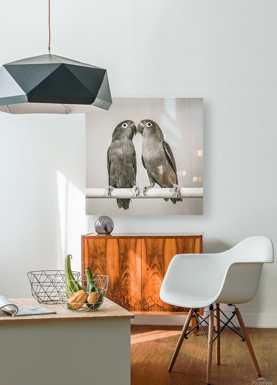 Two love birds kissing  HD Metal print with Floating Frame on Back