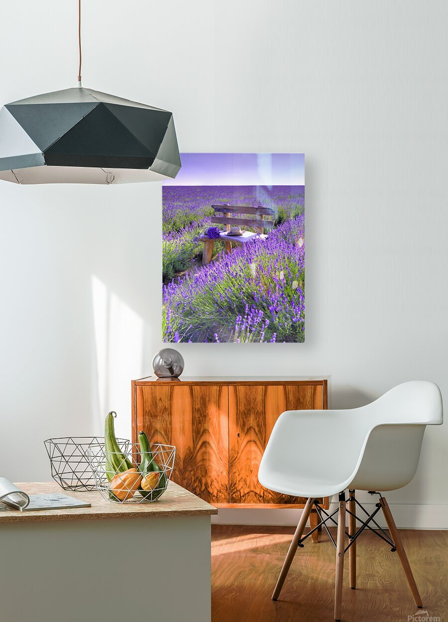 Bench in Lavender field  HD Metal print with Floating Frame on Back