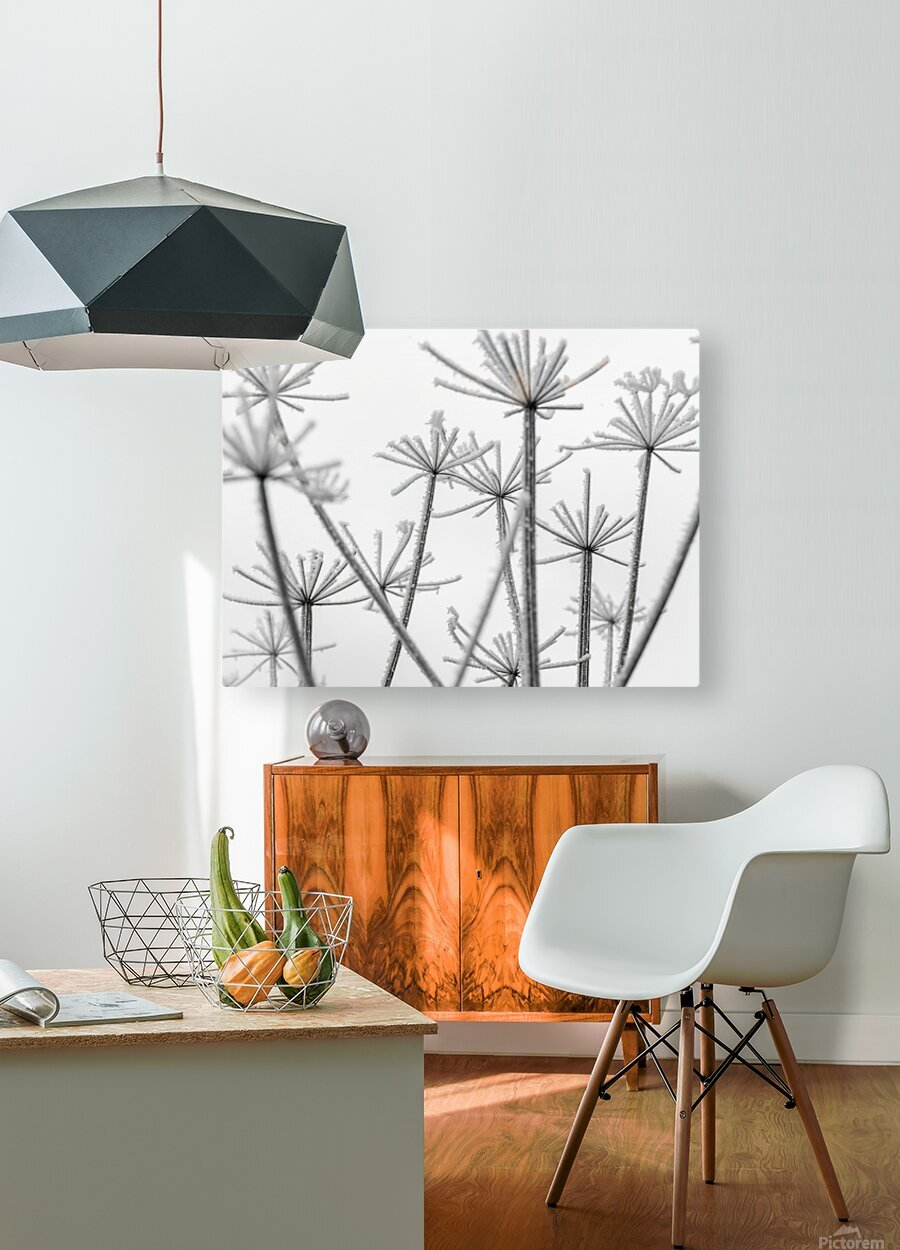 Frosty cow parsley  HD Metal print with Floating Frame on Back