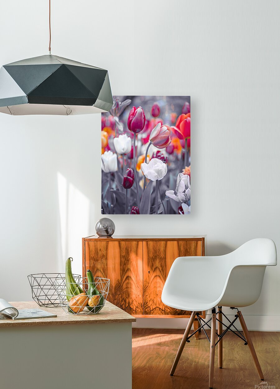 Colorful Tulip flowers  HD Metal print with Floating Frame on Back