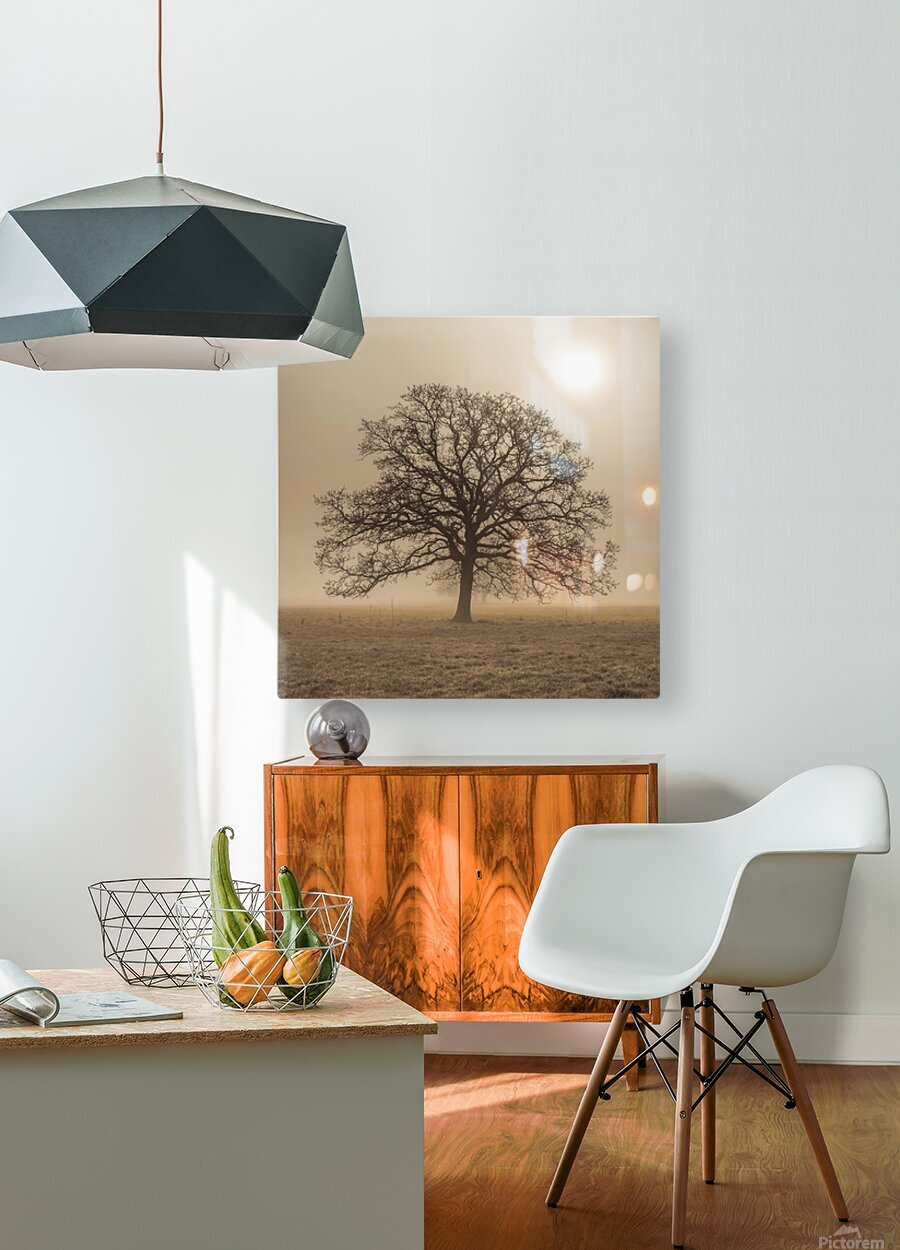 Trees in grass fields  HD Metal print with Floating Frame on Back