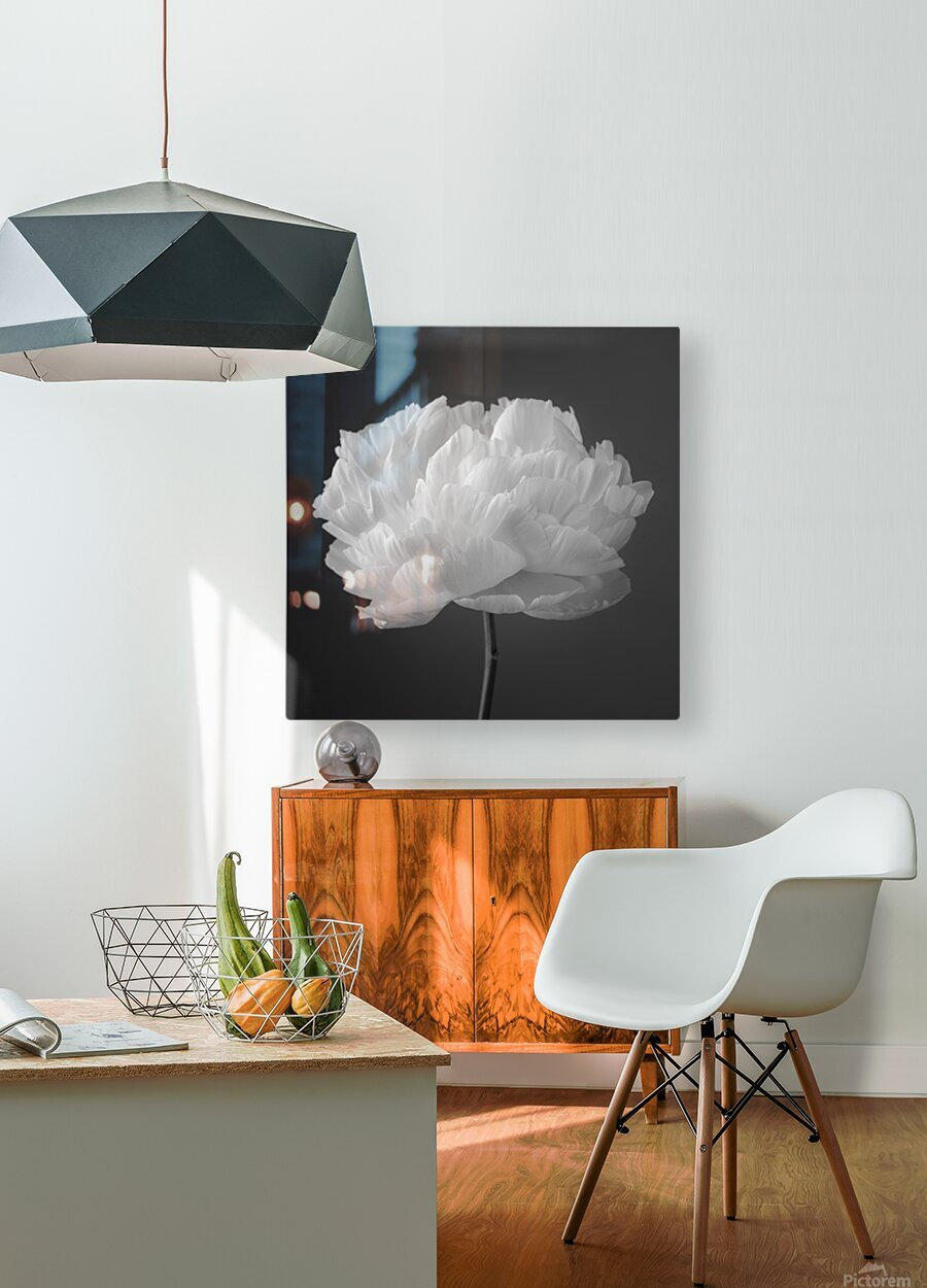 Peony flower  HD Metal print with Floating Frame on Back