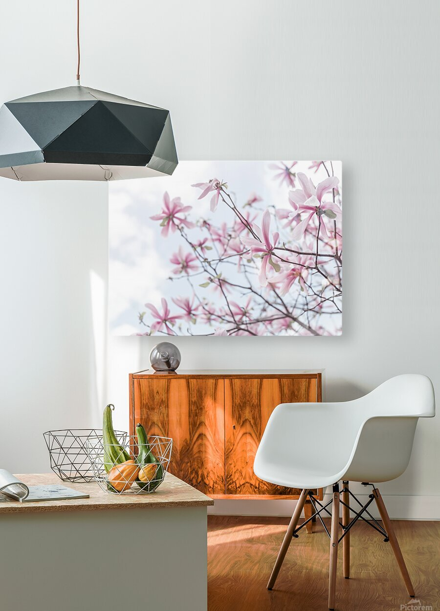 Magnolias against sky  HD Metal print with Floating Frame on Back
