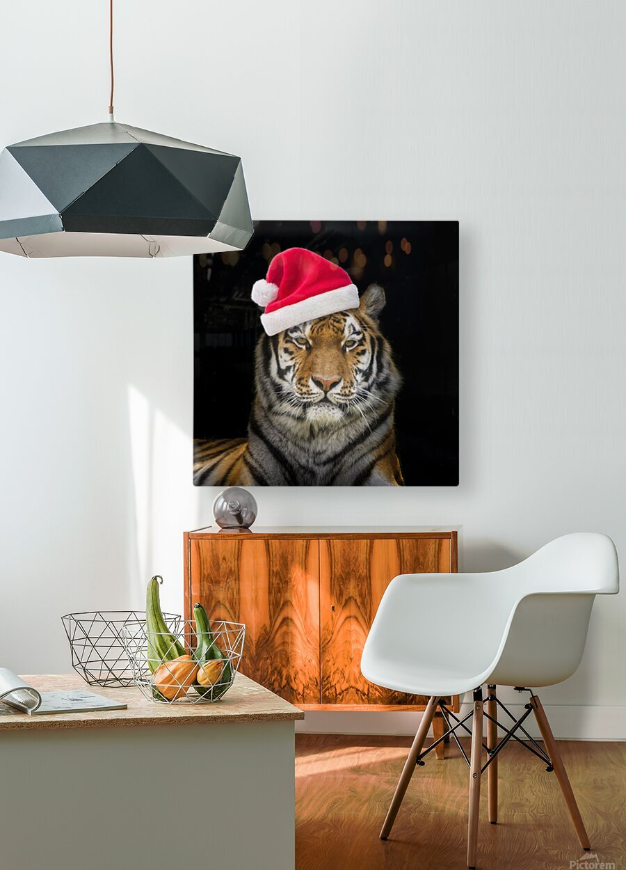 Tiger with Santa hat  HD Metal print with Floating Frame on Back